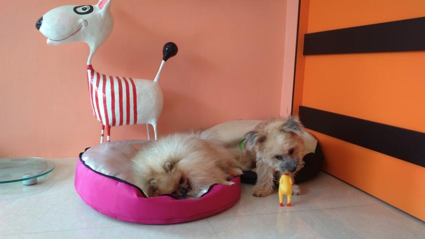 ซาลีฟและหมาลูกค้าฝากเลี้ยง...